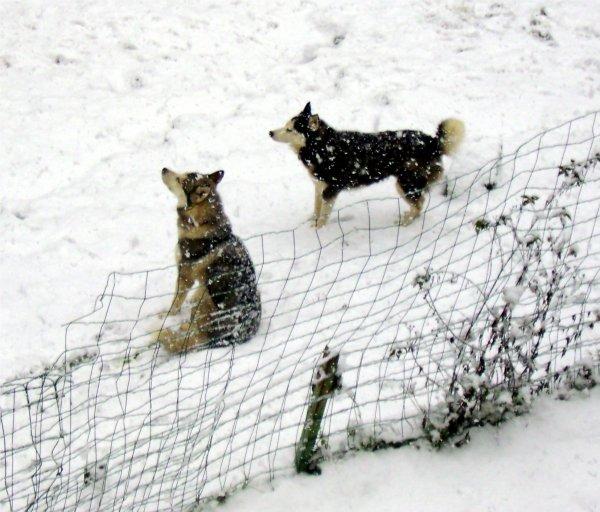 re ce matin de la neige!!!!!