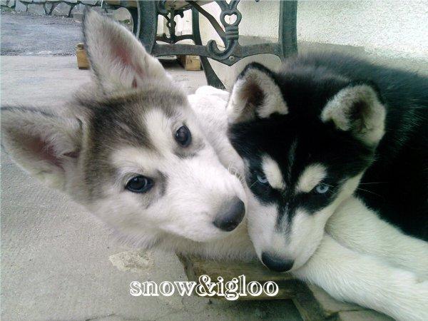 igloo&snow $)