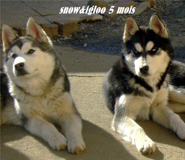 igloo&snow  5 moi