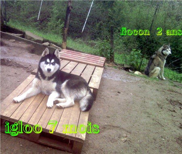igloo&snow 7moi