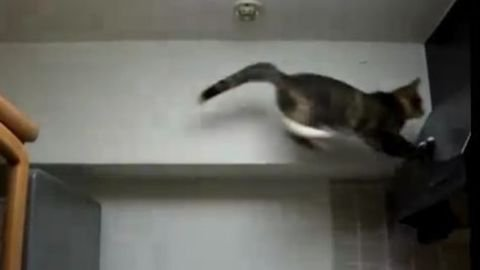 Chutes de Chats!! GAG's Video here>>>>>> http://adf.ly/iCcLW