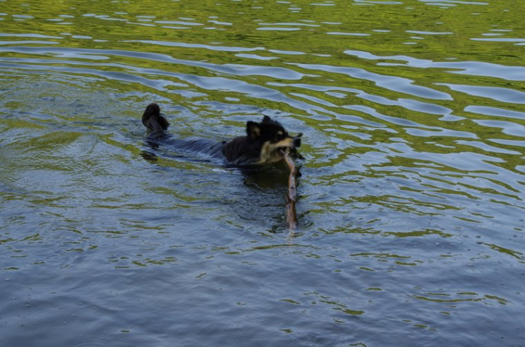 C'est si bon de nager