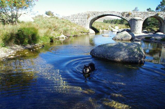 IZIA.....Pose récup au pont du Tarn
