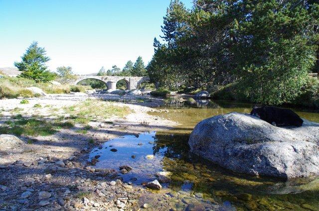 Pif au Pont du Tarn