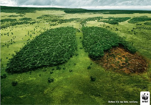 #06 : La déforestation de la forêt Amazonienne