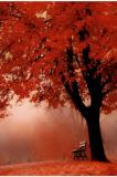 Photo de amitie-automne