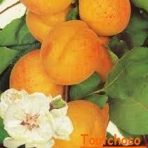 Poulet aux Abricots