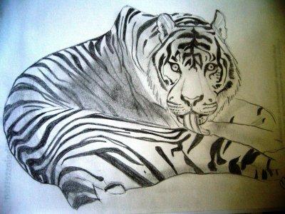 Tigre (fait par moi)