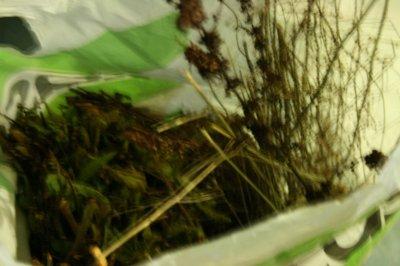 aperçu des herbes sauvages que je donne à mes indigènes