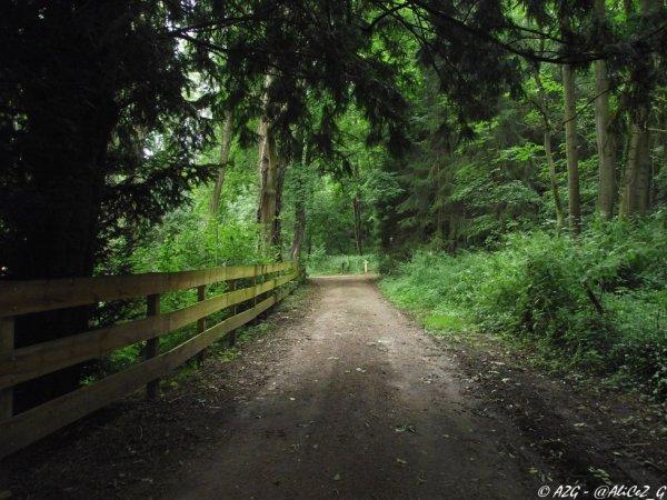 Un chemin, au loin...
