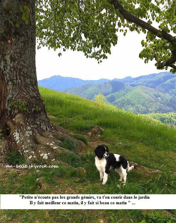 Moi petite devant un chêne lors d'une promenade à travers monts et vallons.  Ich,  ganz klein vor einer Eiche bei einem Spaziergang durch Berge und kleine Täler.