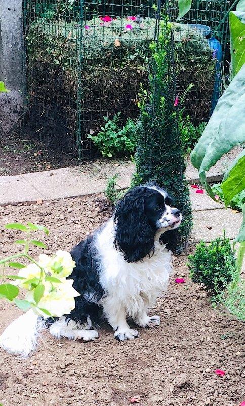 Je contrôle afin que les corbeaux ne viennent pas dans notre compost........... Ich kontrolliere, damit die Krähen nicht in unseren Kompost kommen.