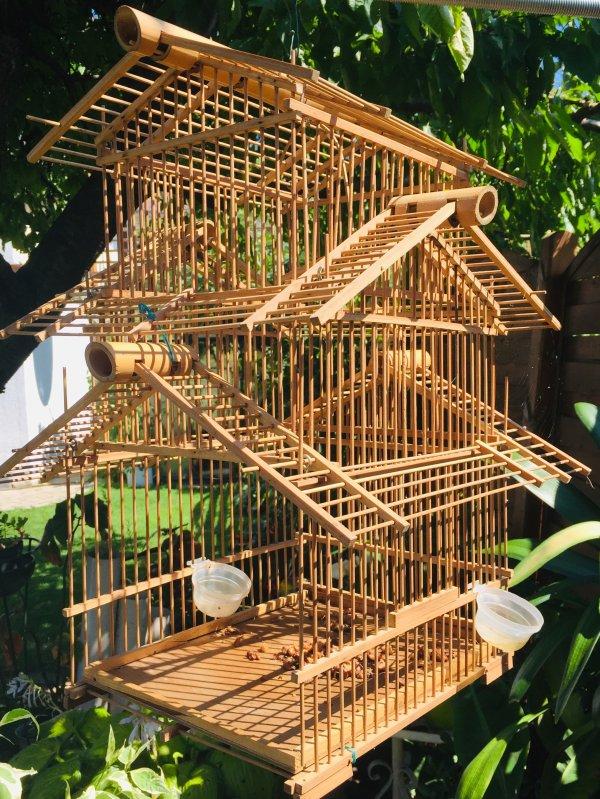 Ouvrez, ouvrez la cage aux oiseaux, regardez-les s'envoler c'est beau…  Öffnen Sie den Vogelkäfig, sehen Sie zu, wie sie fliegen, es ist so schön…