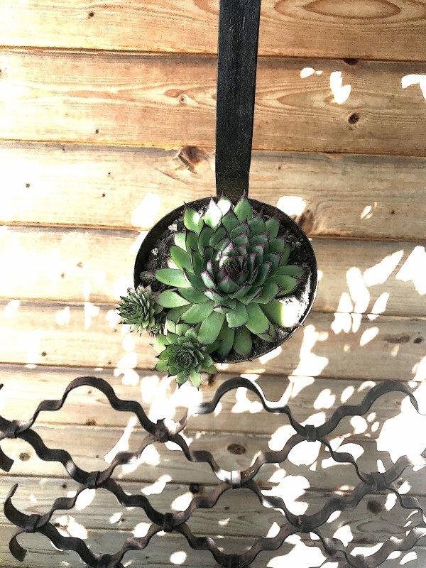 Une louche à soupe, pour ne rien perdre; Dame Cactus a deux bébés........... Eine Suppenkelle, um nichts zu verlieren; Lady Cactus hat zwei Babys.