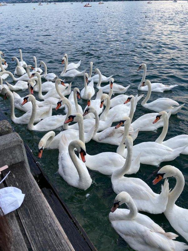"""Et tout à coup, vue sur le """"Lac  des Cygnes"""", pas tout à fait, mais presque.  Und plötzlich ein Blick auf den """"Schwanensee"""", nicht ganz, aber fast."""