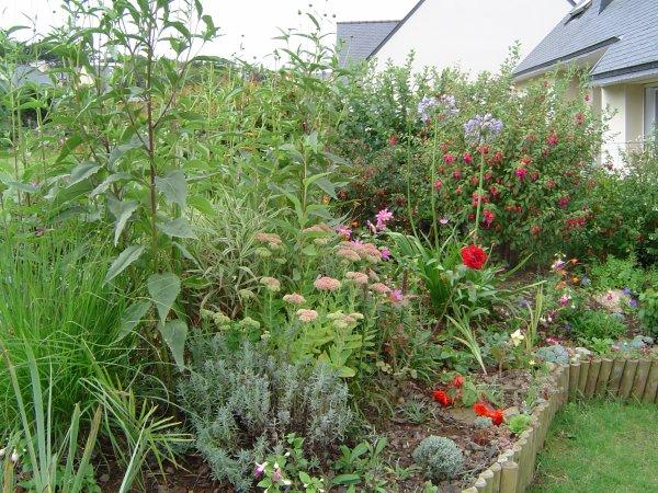 mon jardin en  bretagne  en avril -mai  sous le soleil exceptionnel......