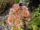 Photo de fleurette29
