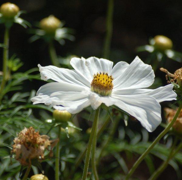 coeur de fleur