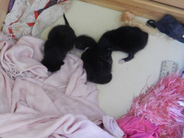 plusieurs naissances chez ma fille 3 lapins et 3 chats