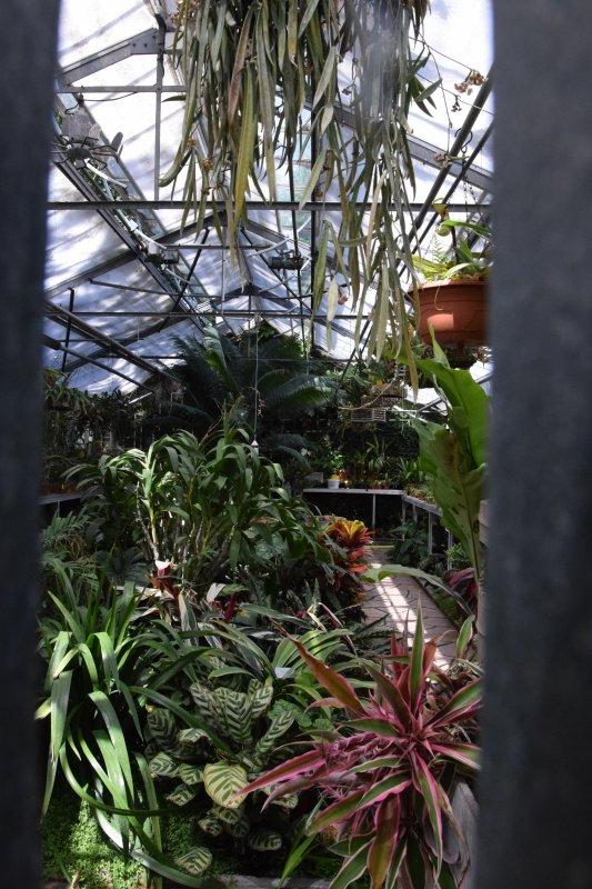 le 8juin petit tour au jardin des plantes