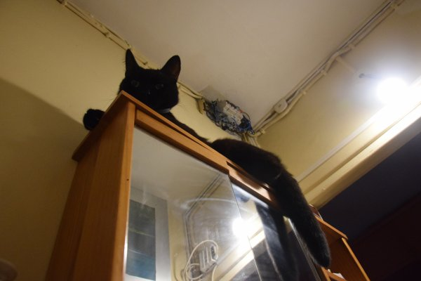 moka mon amour de chat