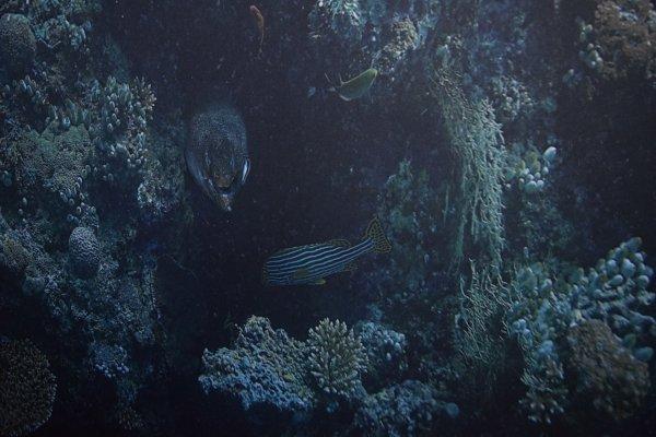 16 septembre rouen sous marin panorama xxl