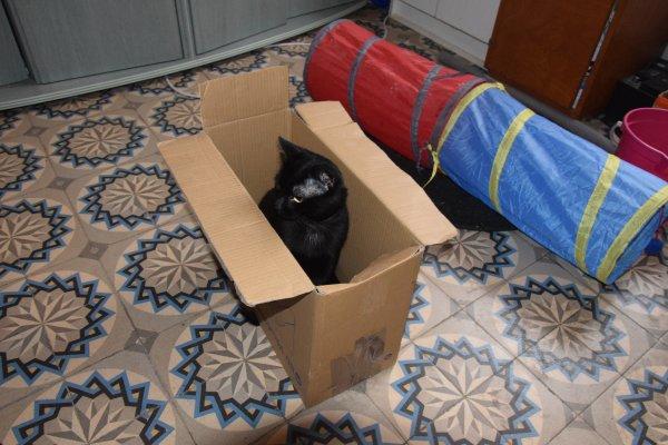 moka et son carton tiens il y aussi black hot