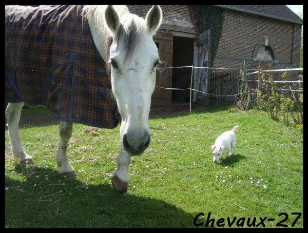 Petits chevaux de mon coeur