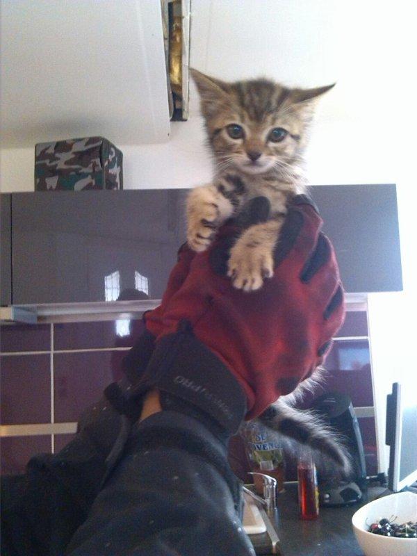 Mon pikie chat