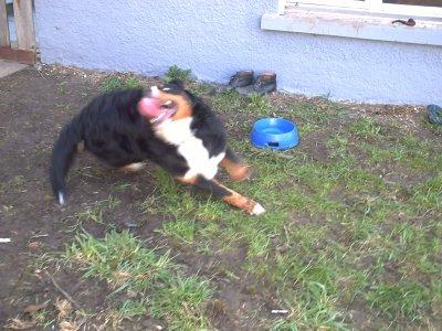 le chien peu aussi savoi ètre comique