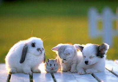la sociabilisation avec les autres animaux