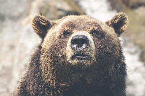 J'adore les l'ourse ??