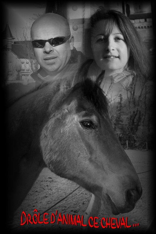 Histoire de cheval ...