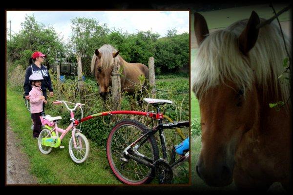 Rando vélo : vive la campagne,