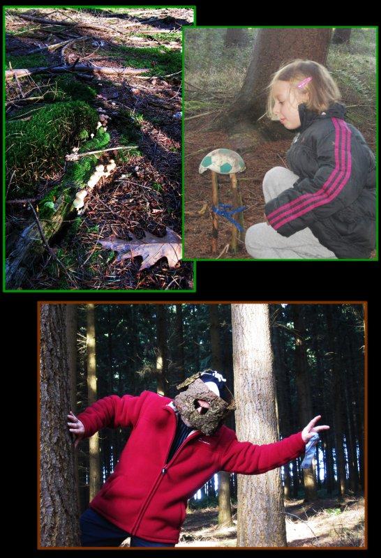 Balade en forêt à la poursuite des champignons !