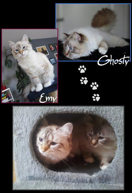Souviens-toi, c'était Emy & Ghosty