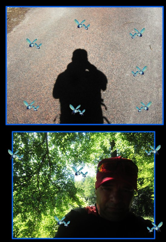 Les mouches d'été du Mont Alta