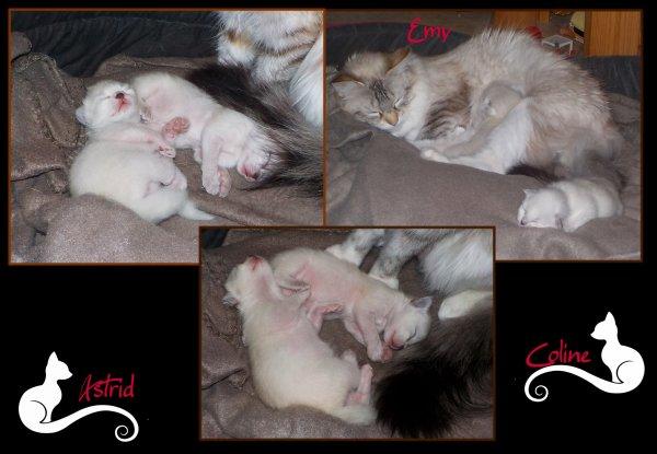 Emy est de nouveau maman ....