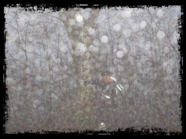 Le brouillard d'un soir d'hiver