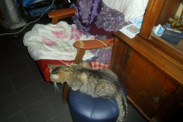 déjà 32 semaine demain que tu es partie mémère - Hommage as mémère une de mais chatte décède