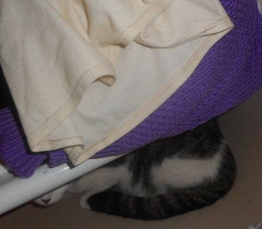 chercher le chat