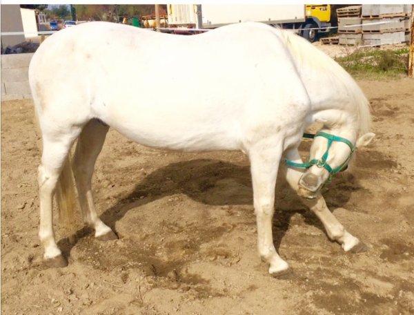 On ne renonce jamais au chevaux