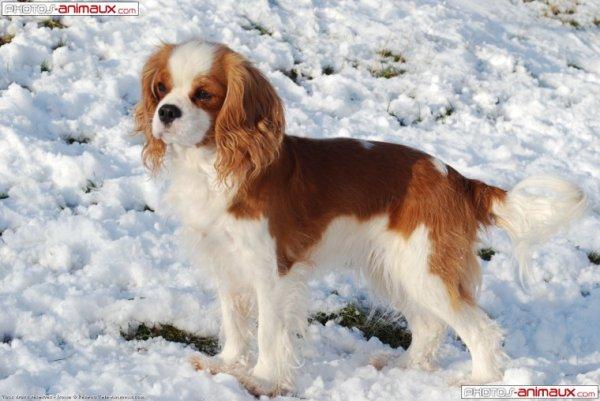 Mes chien préférée  :)