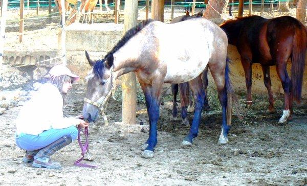 Finalement dresser un cheval  ce n'est pas en faire un robot ou une machine quelconque,  mais en lui gardant sa fraicheur,  un collaborateur obeissant