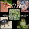 Le Dictionnaires Des Insectes Du Monde