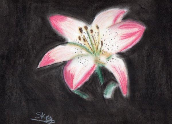 lys rose