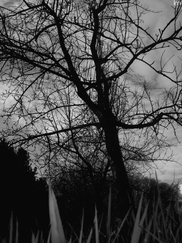 Parc Yourcenar. Saint-Jans-Cappel.