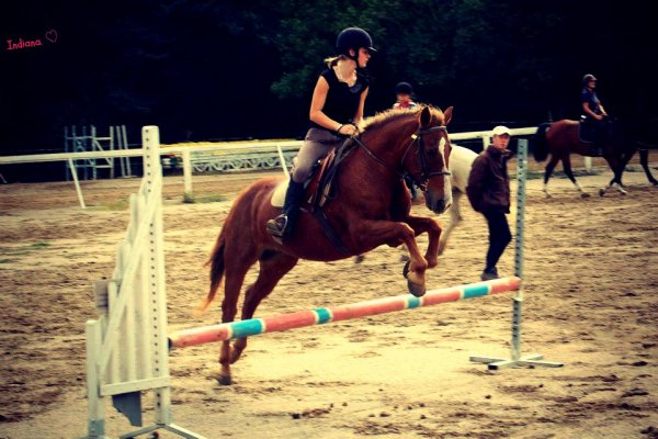 L'équitation, un art, une passion ♫