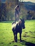 Photo de Oonly-Horsee