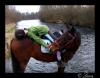 Lara-and-the-horses